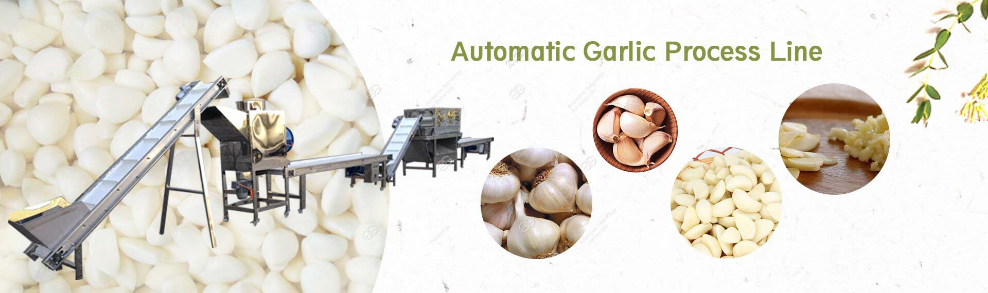 Automatic Garlic Process Machine
