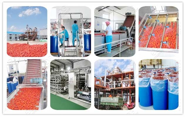 How Much Does It Cost To Own Tomato Processing Factory