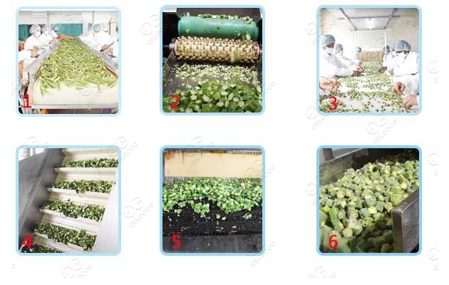 Industrial Frozen Okra Processing Line Okra Cutting Washing Freezing Machine