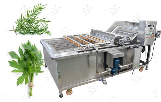 Industrial Herb Leaf Cleaning Machine Lemon Grass Rosemary Lavender China Manufacturer