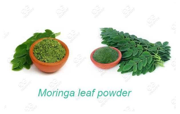 Moringa Leaf Powder Manufacturing Process Steps