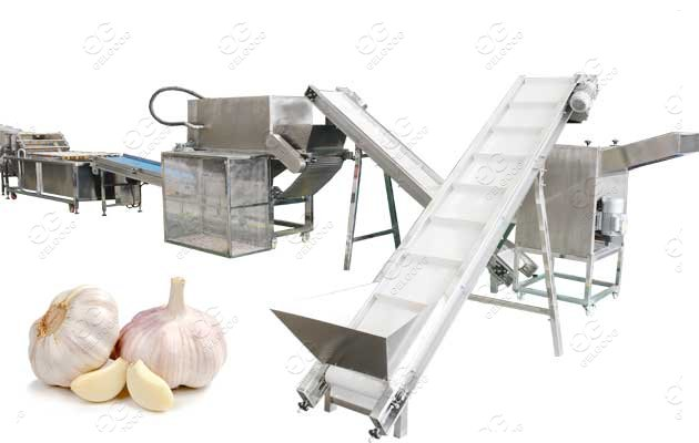 Garlic Processing Equipment Solution From Peeling to Packing